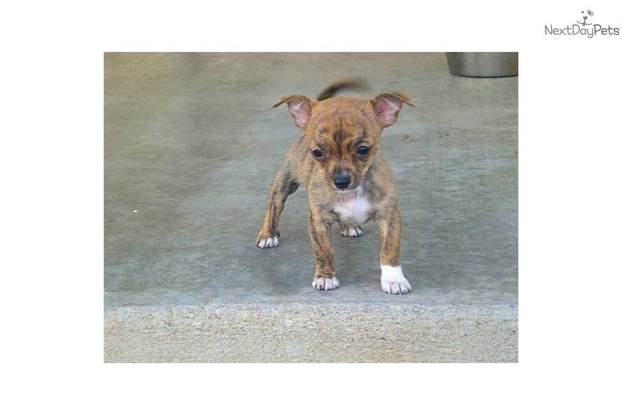 ... dog breeds mountain dog breeds teacup dog breeds list pet dog breeds