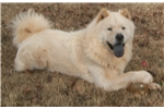 Picture of TEX AKC #14 (licensed by the State of Texas)