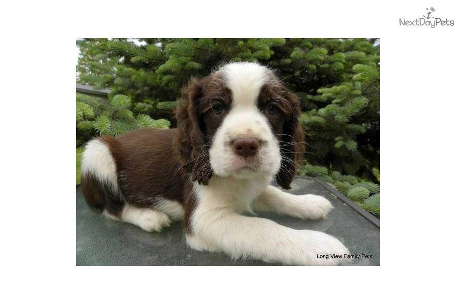 foxglove-boy-akc-ch-lines-benchfielddog-english-springer-spaniel-puppy-e7075c1c-135b-4668-a693-0842e39216c0 Father Daughter Christmas Gifts