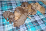Picture of Denali's Litter
