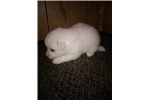 Picture of Lilly-miniature