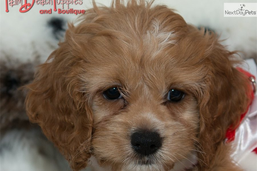 puppies for sale keighley pets world