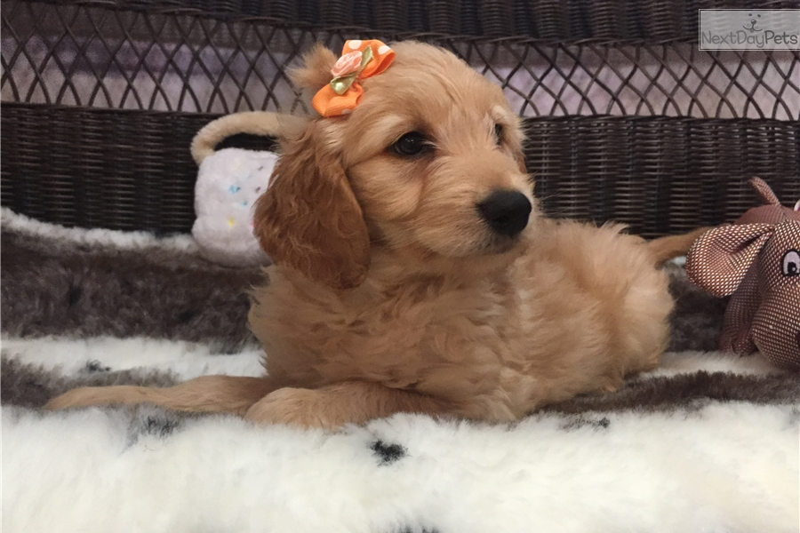Puppies For Sale In West Palm Beach Fl