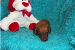 Picture of  Buster Brown.... Perfect Valentine's Present!