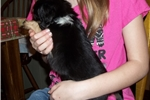 Picture of  Little Oreo...Double Stuffed With Love!!!