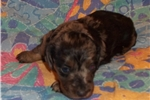 Picture of  Little Peggy Sue... Such A Sweetheart!