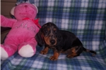 Picture of  Little Maggie Mae... Such A Sweetheart!