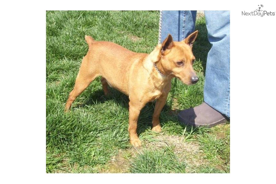 Mountain Cur puppy for sale near Western KY, Kentucky | f302070b-a031