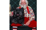 Picture of Solana Skye Terriers