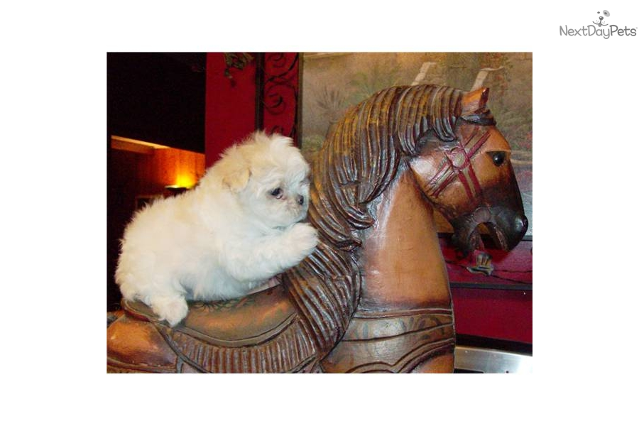 Dogs Puppy For Sale Kennewick Wa