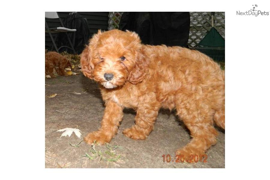 Cavapoo Boy Dog Names