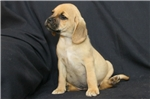 Picture of Little Dawson is looking for his forever home