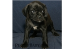 Picture of Carlin will be an addition to your family!