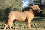 Picture of ~*Rufus Pedigree*~