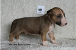 Picture of **AKC Red Rufus**