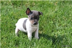 Picture of TOY RT FEMALE-VERY TINY- Blue Girl- READY 4-17-17