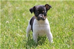 Picture of HOLLY-UKCI REG FEMALE MINI RT-READY JUNE 14