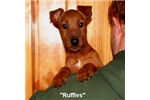 Picture of Ruffles - Classy Red Irish Lassie