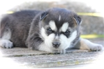 Picture of Apache