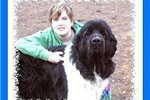 Featured Breeder of Newfoundlands with Puppies For Sale