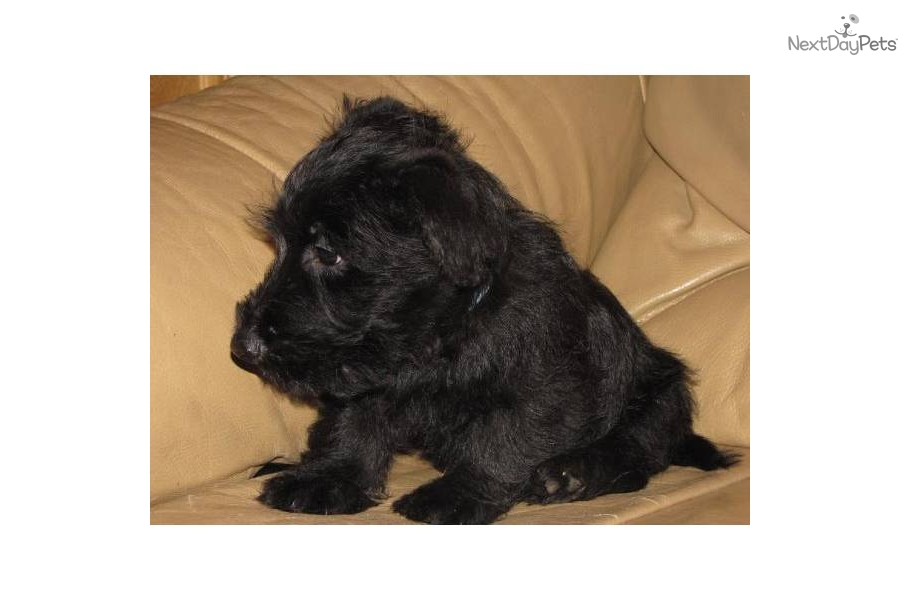 akc dog top 100 breeds to download akc dog top 100 breeds just right ...
