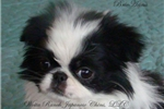 Picture of BrieAnna (Dolly)