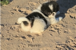 Picture of Pierre..So cute, even he can't stamd it!  Neutered