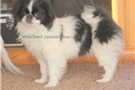 Picture of  Bennington from the Woita Ranch! ~ Neutered