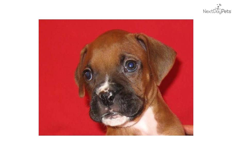 Boxer Forum Dog Food