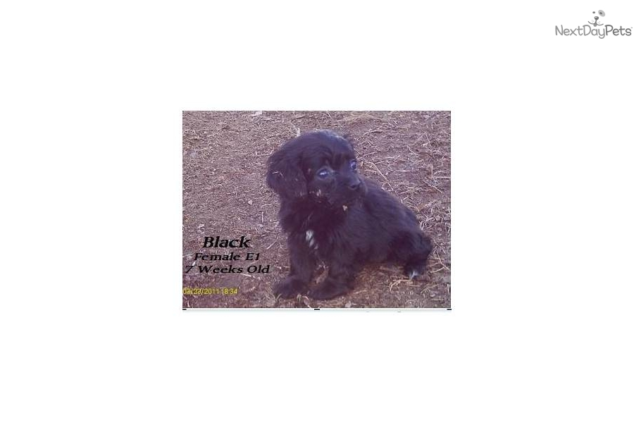 Breeds Of Dogs Black With White Stripe On Chest