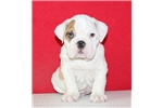 Picture of AKC Buster