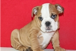 Picture of AKC Mack