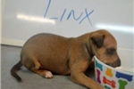 Picture of Looking at Linx
