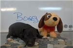 Picture of Bogey is Here!