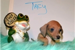 Picture of Trey wins the terrific puppy award!