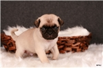 Picture of Axel @ Newpuppies4u.com