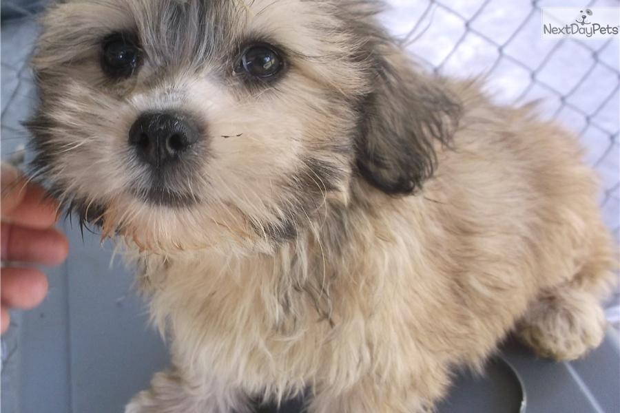 Service Dog Adoption Florida
