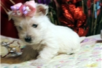 Picture of WISH - is ready to share your Valentine - AKC