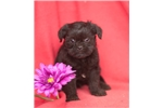 Picture of Jakob, Male, $1195