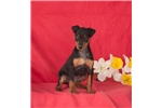 Picture of Buddy, Male, $795
