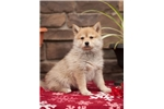 Picture of Sandy, Female, $2500