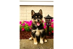 Picture of Acko, Male, $2000