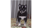 Picture of Buddy, Male, $2000