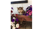 Picture of Layla, Female, $4000