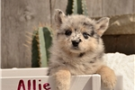 Picture of Allie, Female, $2000