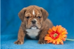 Picture of Rex, Male, $995