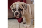 Picture of Bosso, Male, $1200