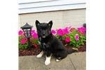 Picture of Zoe, Female, $2000