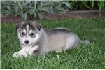 Picture of Max, Male, $4750