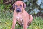 Picture of Camo, Male, $800